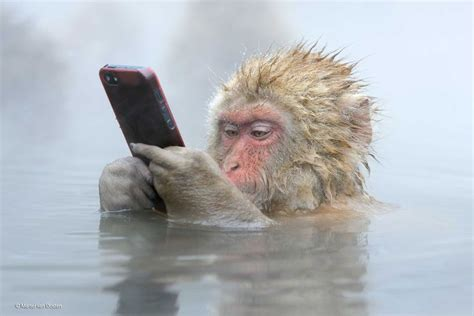 This picture of a monkey using an iPhone won an award