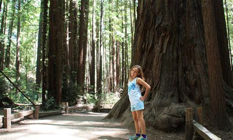 Explore the Giants at Armstrong Redwoods State Natural