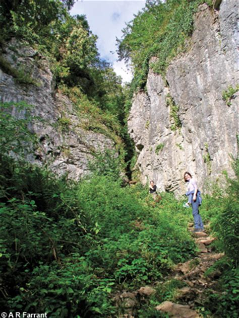Wookey Hole and Ebbor Gorge | Locality areas | Foundations