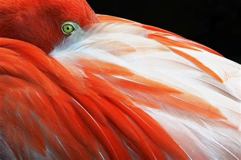 The Story Flamingos Don't Want You to Read - The New York