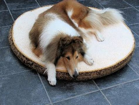 What Are the Causes of Back Leg Weakness in Dogs? - Pets