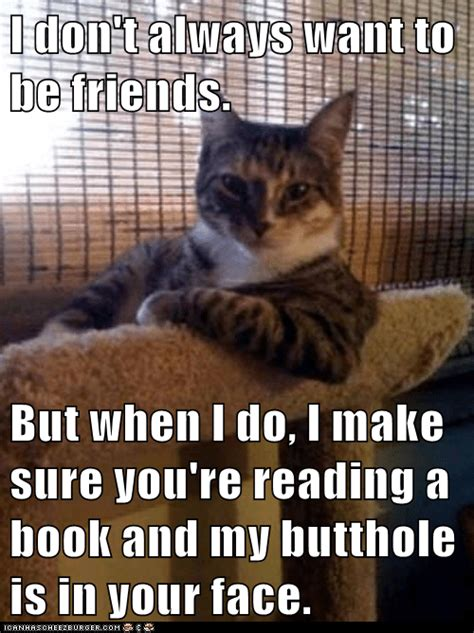 Animal Memes: The Most Interesting Cat in the World - BFF