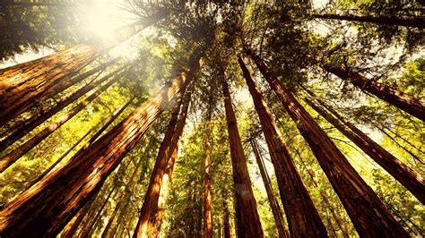 Muir Woods National Monument Wallpapers - Wallpaper Cave