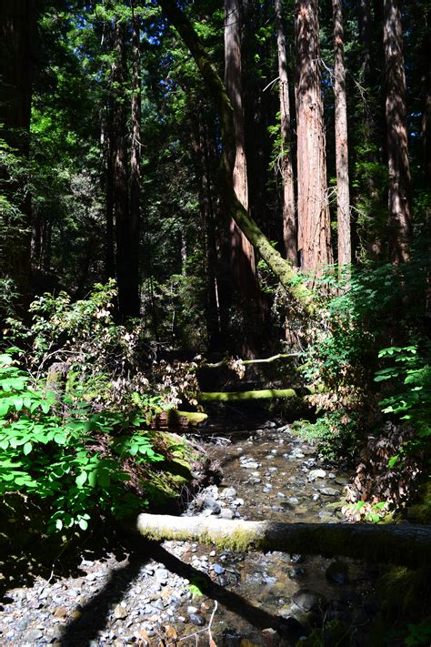 Muir Woods National Monument | chasing clouds