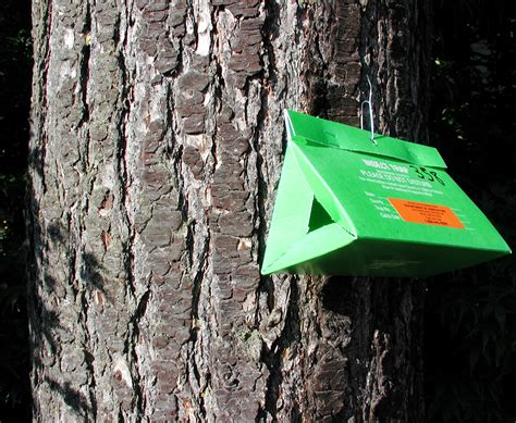 See one of these on an Edmonds tree near you? Here's the